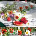 Editos-spalvos - Puodeliai su aguonomis