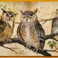 Peleda-išminties paukštis