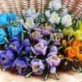 krokai-quot-spalvotas-pavasaris-quot