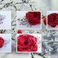 Raudonoji gėle - segė