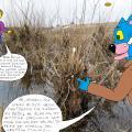 Vienaturtis - Polaidžio vandens apsemtame Papyvesio slėnyje 2