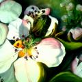 Editos-spalvos - Pavasariniai žiedlapiai